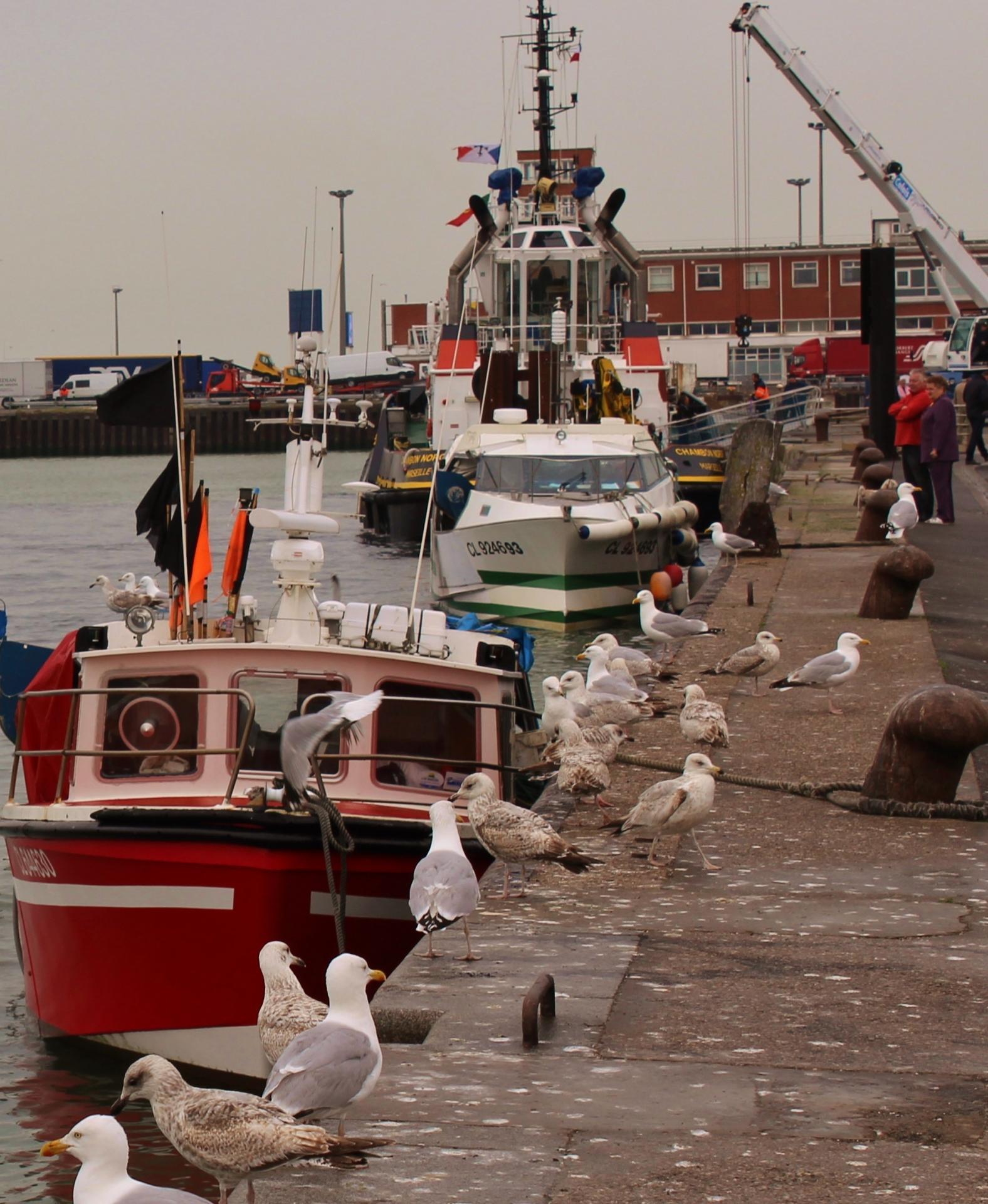 Calais benediction de la mer 2015 e
